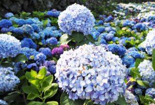 【台北竹子湖 | 景點】唯美花廊配上遍地盛放的奼紫嫣紅❀大梯田花卉生態農園