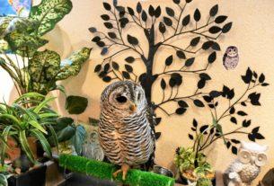 【日本奈良 | 咖啡廳】療癒滿點的貓頭鷹咖啡廳☀Wata Wata Owl Cafe