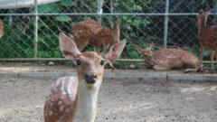 【屏東墾丁 | 景點】阿信巧克力農場 欣賞生態與表演 還有DIY與可愛小鹿