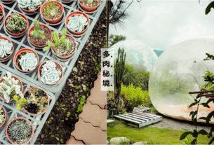 【南投】多肉秘境|夢幻泡泡屋景觀,療癒多肉植栽堅持親民價,可以體驗手作盆栽課程。