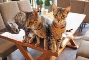 【新北白沙灣 | 咖啡廳】海角邊的貓咪樂園ღ豹豹咖啡館 Bo.Bo.Cafe(海邊館)